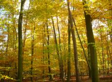 Nieuwe uitbreiding voor Krommebeekbos Roeselare